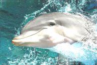 Общение с дельфинами дарит радость, приносит счастье