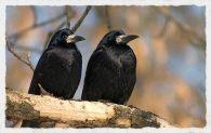 Прилетают весной перелетные птицы
